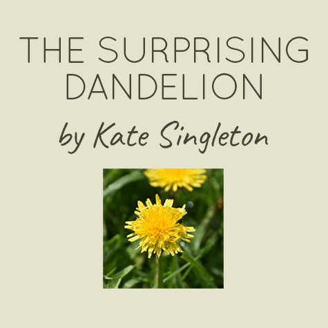 The surprising dandelion by Kate Singleton